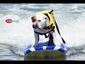 surfboarding dog