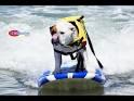 surfboarding dog