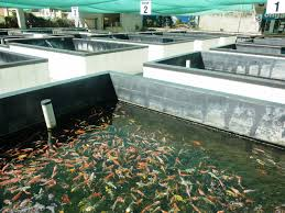 dirty fish tank