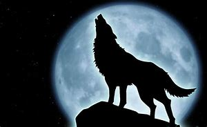 trump wolf and moon